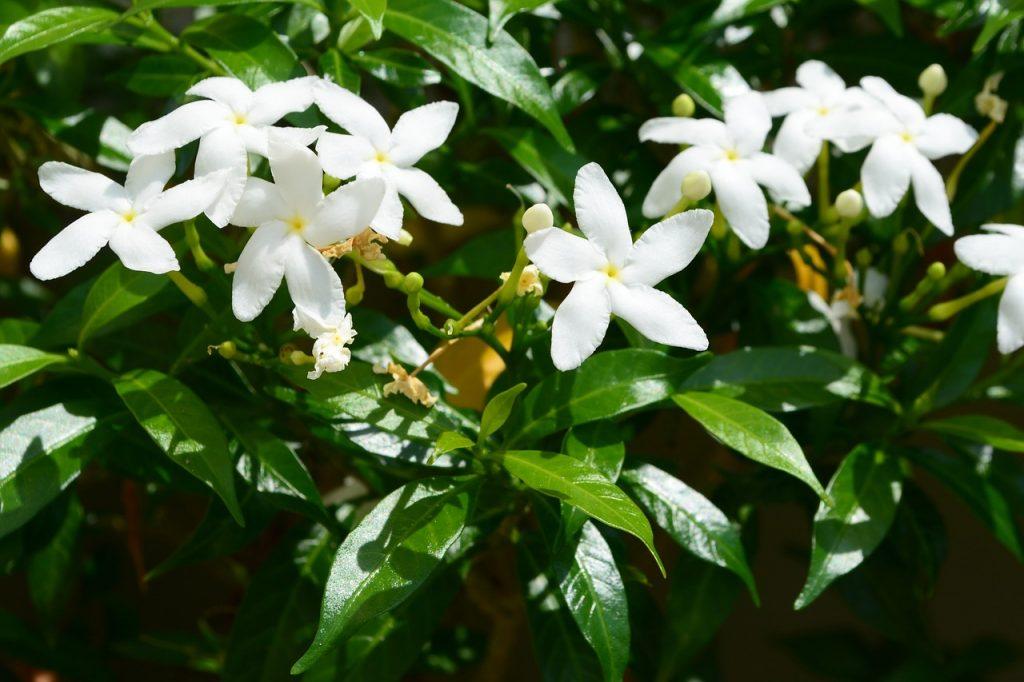 flower-599014_1280